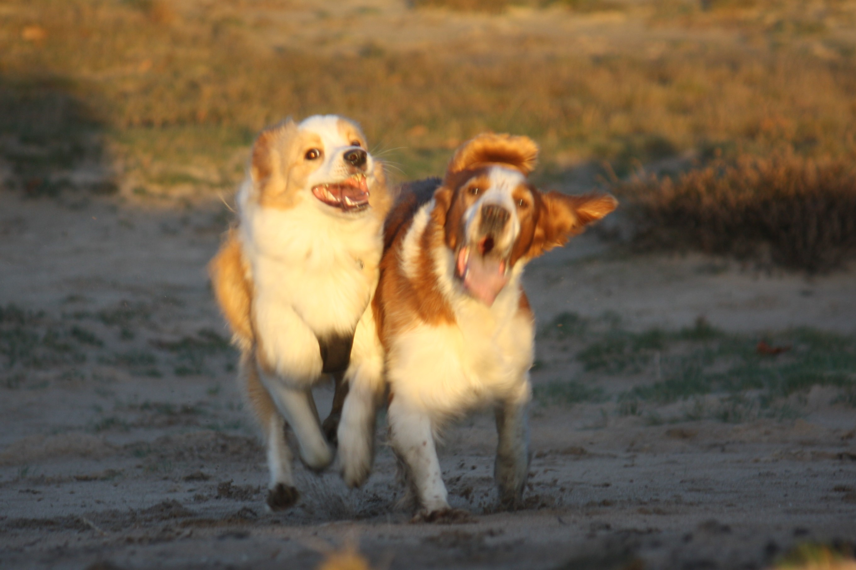 blije honden