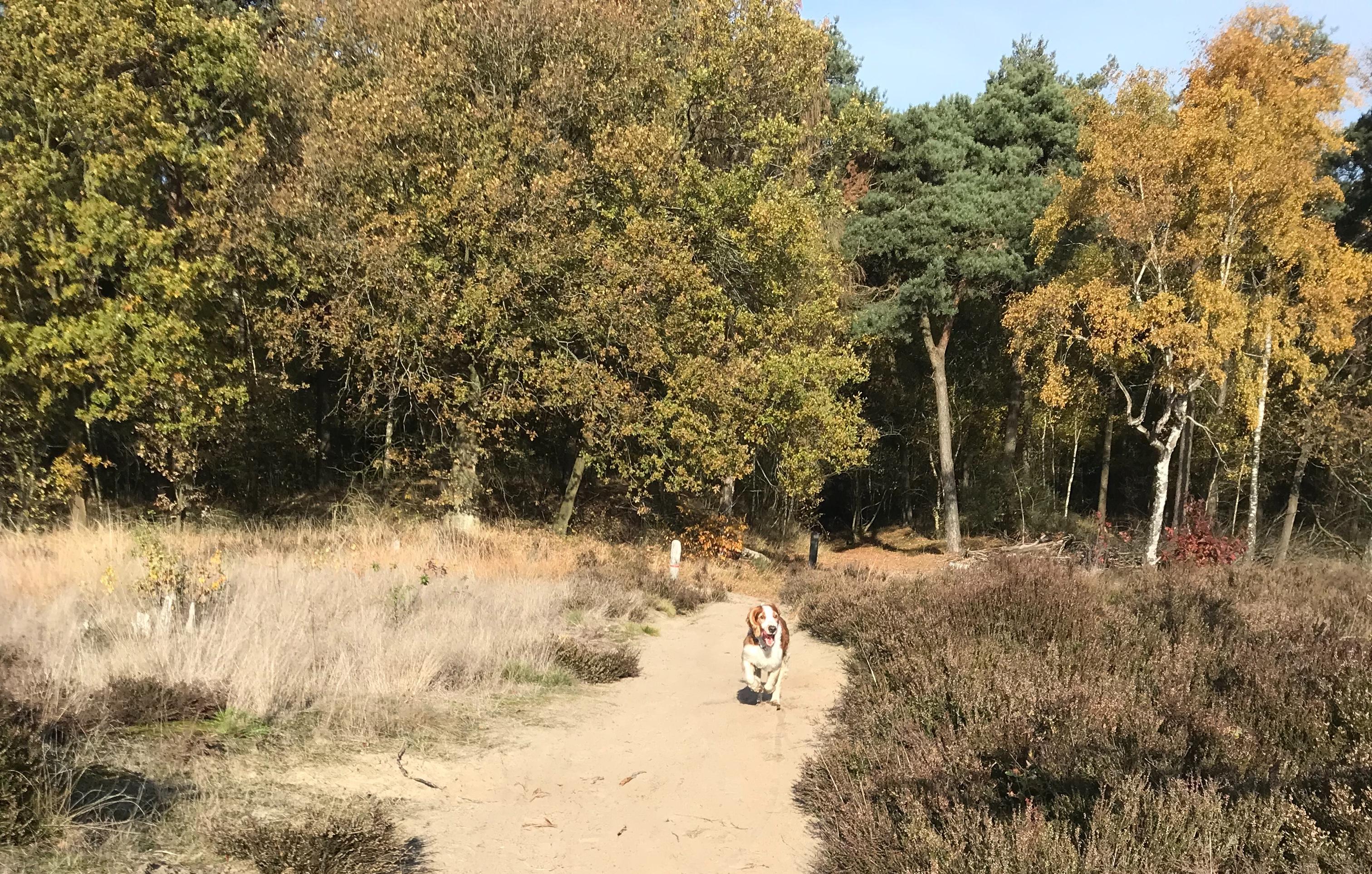 hond wandeling